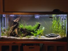 My planted fish tank. October 2013 https://www.youtube.com/user/calebsfish