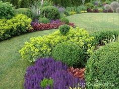 Ogród mały, ale pojemny;) - strona 80 - Forum ogrodnicze - Ogrodowisko Bungalow Landscaping, Backyard Landscaping, Cottage Garden Design, Ornamental Grasses, Lawn Care, Shade Garden, Dream Garden, Garden Inspiration, Gardening Tips