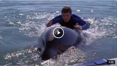 Watch the movie trailer. Available via youtube.com. Free Willy, Kid Movies, Movie Trailers, Penguins, Watch, Youtube, Kids, Animals, Young Children