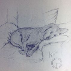 Bienvenido sea el lunes! Les dejo un dibujo que hice de Dona una perrita muy querida! Espero les agrade!  Let's start this week with a drawing of Dona, my girlfriend's doggy! I hope you like it!  #dog #doggy #monday #fun #follow #happy #picoftheday #photooftheday #like #igers #instagood #instagram #instalike #instadaily #instamood #dona #sleepy #drawing #sketch #pencil #gerart #art #artist