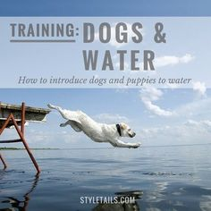 ADVICE   How to introduce dogs and puppies to water #dogsandpuppiestraining
