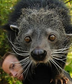 Lucy the binturong celebrates her 5th birthday at the Cincinnati Zoo in Ohio. Happy birthday, Lucy!
