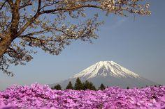 Lãng mạn Fuji