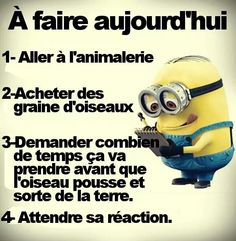 Des graines d'oiseaux... Citation Minion, Wtf Funny, Hilarious, Funy Quotes, English Jokes, Funny French, Lol, Funny Times, French Quotes