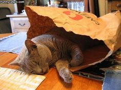 I Sleep In A Bag