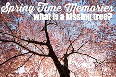 What is a Kissing Tree? Spring Time Memories - #febrezespring #sp
