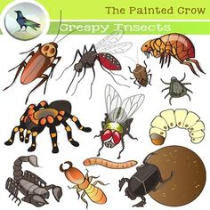 Creepy Insect Clip Art - Bug Illustrations - 24 piece color and blackline set