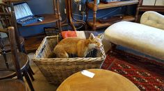 A Taxidermy old antique fox in a antique wicker cane basket caught my eye for sure at Hemswell antiques Lincoln