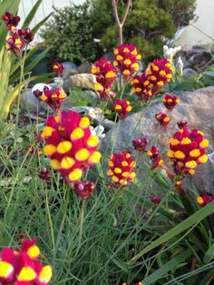 San Diego, exotic flower