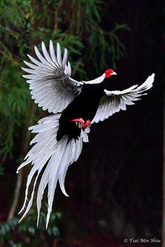 Birds, Animals, Animales, Animaux, Animal, Bird, Dieren, Animais