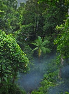 Swing through the Daintree Rainforest, Australia with Jungle Surfing Canopy Tours Queensland Australia, Australia Travel, Tasmania, Oh The Places You'll Go, Places To Visit, Beautiful World, Beautiful Places, Daintree Rainforest, Amazon Rainforest
