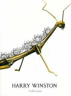 Mantis diamond gold insect brooch