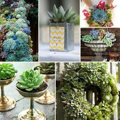 Succulent weddings