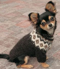A easy written pattern to make your own dog sweater with fair isle look. The sweater is meant for little dogs, so for example a chihuahua or a dog thats a little bigger. Dog Sweater Pattern, Knit Dog Sweater, Dog Pattern, Love Knitting, Knitting Kits, Knitting Patterns, Little Dogs, Cute Puppies, Cute Dogs