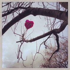 A somewhat #artistic end for #Maya's #Valentines day #ballon Get the #KookyLondon #App https://itunes.apple.com/gb/app/kooky-london/id625209296?mt=8 #ig_London #London #igLondon #London_only #UK #England #GreatBritain #British #iPhone #kooky #quirky #odd #weird #photoftheday #photography #picoftheday #igerslondon #londonpop #lovelondon #timeoutlondon #instalondon #londonslovinit #Padgram