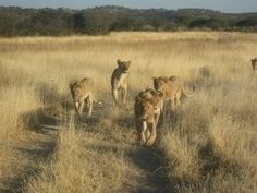 Exciting sightings galore at Ongava Reserve