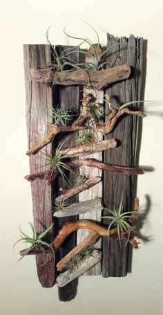 Wood & Air Plant Wall Art Using drift wood and air plants to create a unique piece of art.Using drift wood and air plants to create a unique piece of art.