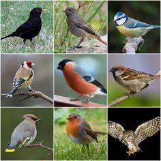 Montessori Science, Preschool Learning Activities, Pretty Birds, Beautiful Birds, Montessori Materials, Creative Kids, Biology, World, Flowers