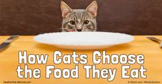 Researchers discovered that given the option, cats will choose food based on its nutritional value, not how it smells or tastes. http://healthypets.mercola.com/sites/healthypets/archive/2016/09/13/cats-choose-food-they-eat.aspx