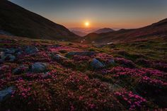 Sunrise over rhododendrons Photo by Gheorghe Popa — National Geographic Your Shot