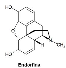 Chemical structure of endorphins.
