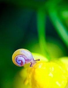 the beautiful snail