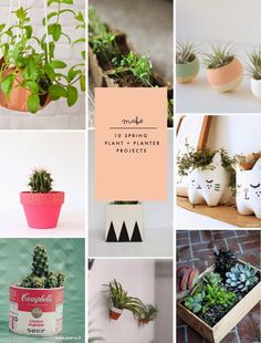 Poppytalk: 10 Spring Plant + Planter DIY Projects