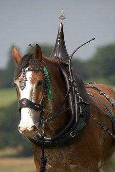 Draft horse - Clydesdale - by Tony Golding Big Horses, Work Horses, Horses And Dogs, Horse Love, Draft Horse Breeds, Draft Horses, Fat Horse, Horse Tack, Horse Pictures