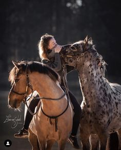 There are such a lot of horse breeds that it'd take a whole book to hide the topic. A breed for each purpose, horses are available in all shapes, colors. Cute Horses, Pretty Horses, Horse Love, Beautiful Horses, Animals Beautiful, Funny Horses, Cute Funny Animals, Cute Baby Animals, Animals And Pets