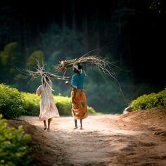 africanstories: The Wood gatherer's daughters Two sisters bring the firewood home on the Lujeri Tea Estate on the slopes of Mount Mulanji in Malawi - by Photocillin Photography Walk Together, Our World, In A Heartbeat, Continents, Giraffe, Beautiful People, Walking, Live, Photography
