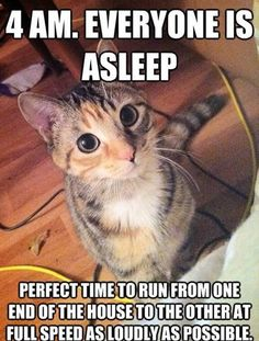 The night crazies! If you've had a cat, you know this is true!
