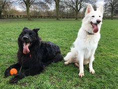 Jasper and Lyra