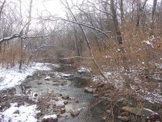 Flat Branch Creek Picture a Day, Tunnel of Love, December 16th 4pm - about 1/2 hour before sunset