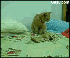 17 animales que no tienen ni la menor idea de lo que está pasando