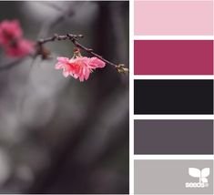budding hue design seeds hues tones shades  color palette, color inspiration