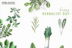 Thank you from HANE - Thank an Herbalist Day (April 17)