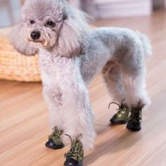 Best Dog Boots To Buy & How To Protect Your Dog's Paws Throughout The Year Little Doggy Haven Funny Dogs, Cute Dogs, Dog Boots, Dog Paws, Little Dogs, Dog Supplies, Best Dogs, Dog Lovers, Puppies