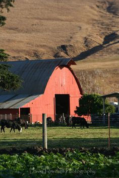 Beautiful Reddish Pink Barn & Horses