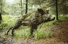 Wild Boar Clearing  Grizedale Forest Park  Cumbria, England, Artist: Sally Matthews - England (1964-).