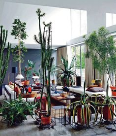 want the plants