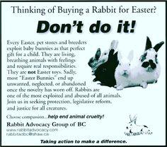 Buy a stuffed bunny! #easter #adoptdontshop #bunny #bunnies #rabbit #rabbits #cuteanimal #cuteanimals #pet #pets