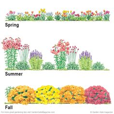 Spring Start by planting a colorful mix of tulips Tulipa spp and hybrids Summer Lilies Lilium hybrids drumstick allium Allium sph Garden Mum, Flower Garden Plans, Tulips Garden, Garden Design Plans, Flower Garden Design, Garden Bulbs, Lawn And Garden, Flower Bed Designs, Diy Garden