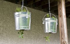 hanging tomato plants with Thyme and parsely