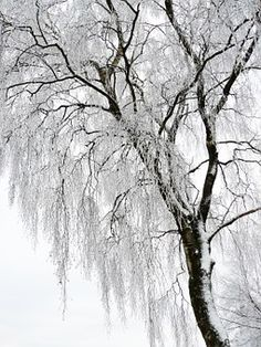 Winter, White, Cold, Snow, Wintry