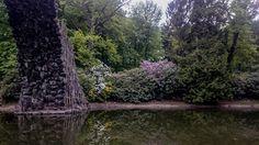MIEJSCÓWKA: KROMLAU PARK RODODENDRONÓW Park, Plants, Parks, Plant, Planets