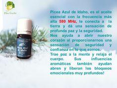Picea Azul el aceite esencial con la frecuencia más alta conocida por el hombre. 580 MHz