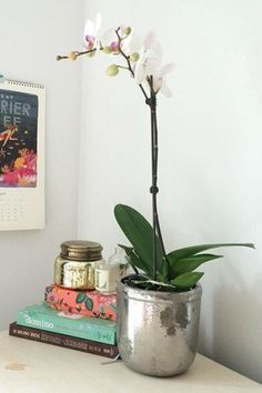 Metallic Crackle Herb Pot | Pinned by topista.com