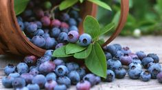 Blueberries anyone? Learn how to grow them. http://www.homelife.com.au/