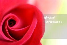 Getty Images - Buscar: Ver resultados similares 107273014