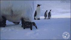 Penguins find a camera